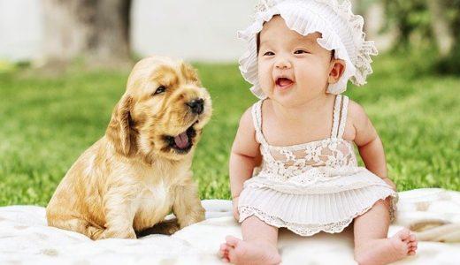 犬のペットがいる家庭で赤ちゃんをどのような環境で育てるべきか調べた